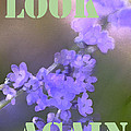 Look Again by Pamela Cooper
