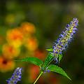 Look At Me Garden by LeeAnn McLaneGoetz McLaneGoetzStudioLLCcom