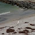 Look Back Bird by Katie Beougher