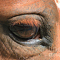 Look Into My Eye by TN Fairey