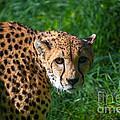 Look Of The Hunter by Yuri Levchenko