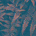 Looking At Ferns Another Way by Mother Nature