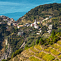 Looking Down Onto Corniglia by Prints of Italy