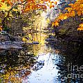 Looking Down The Eno River by Sandra Clark