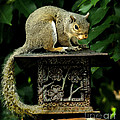Looking For Nuts by James C Thomas