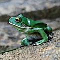 Looking Green by Ben Yassa