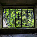 Looking Through Old Basement Window On To Vibrant Green Foliage Fine Art Photography Print  by Jerry Cowart