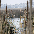 Looking Through The Reeds by Spikey Mouse Photography
