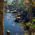 Looking Through The Trees At Point Lobos by Joyce Dickens