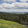 Looking To The Canyon - Yellowstone by Belinda Greb
