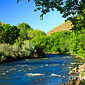 Looking Up Pine Creek by Robert Bales