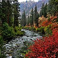 Loon Creek In Fall Colors by Link Jackson