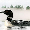 Loon In Fog by Brent Ander