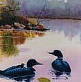 Loons At Twilight by Brenda Thour