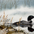 Loons Misty Shore by James Williamson
