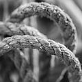 Loops by Fran Riley