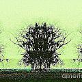 Lord Of The Trees by Lizi Beard-Ward