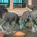 Los Colinas Mustangs 14675 by Guy Whiteley