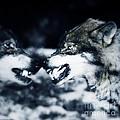 Los Lobos by Angel Ciesniarska