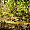 Lost Bridge On Caddo Lake by Tamyra Ayles