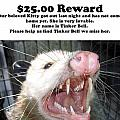 Lost Cat Cash Reward by Michael Ledray