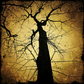 Lost In The Forest I Broke Off A Dark Twig And Lifted Its Whisper To My Thirsty Lips by Natasha Marco