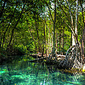 Lost Lagoon On The Yucatan Coast by Mark E Tisdale
