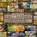 Lost Maples Collage by Alice Burghart