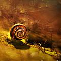 Lost Shell by Jaroslaw Blaminsky