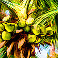 Lots Of Coconuts by Sabine Edrissi