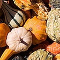 Lots Of Little Gourds by Barbara McMahon