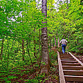 Lots Of Steps On La Chute Trail In Forillon Np-qc by Ruth Hager
