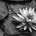 Lotus 2 by Brian Stevens