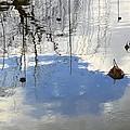 Lotus Arabesque by Viktor Savchenko