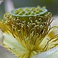 Lotus Detail by Heiko Koehrer-Wagner