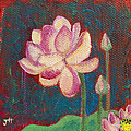 Lotus Dream by Jaime Haney