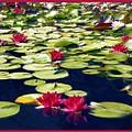 Lotus Dream by Kurt Van Wagner