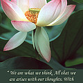 Lotus Flower Buddha Quote by Chris Scroggins