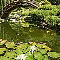 Lotus Garden - Japanese Garden At The Huntington Library. by Jamie Pham