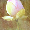 Lotus Looking To Bloom by Sharon M Connolly