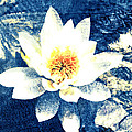 Lotus On Blue by Ann Powell