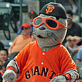 Lou Seal San Francisco Giants Mascot by Tap On Photo