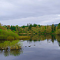 Lough Eske In The Morning by Bill Cannon