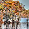 Louisiana Autumn by Ester  Rogers