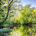 Louisiana Bayou by Kathleen K Parker