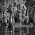 Louisiana Bayou by Mountain Dreams