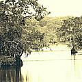 Louisiana Chicot State Park  by Lizi Beard-Ward