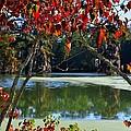 Louisiana Fall by Charlotte Schafer