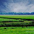 Louisiana Greenway by Lizi Beard-Ward