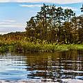 Louisiana Lake by Diana Powell